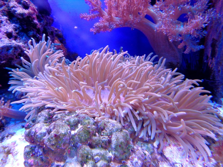 coral-1053834_1920