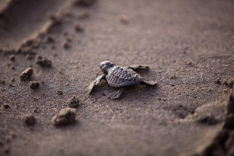 sea-turtle-356125