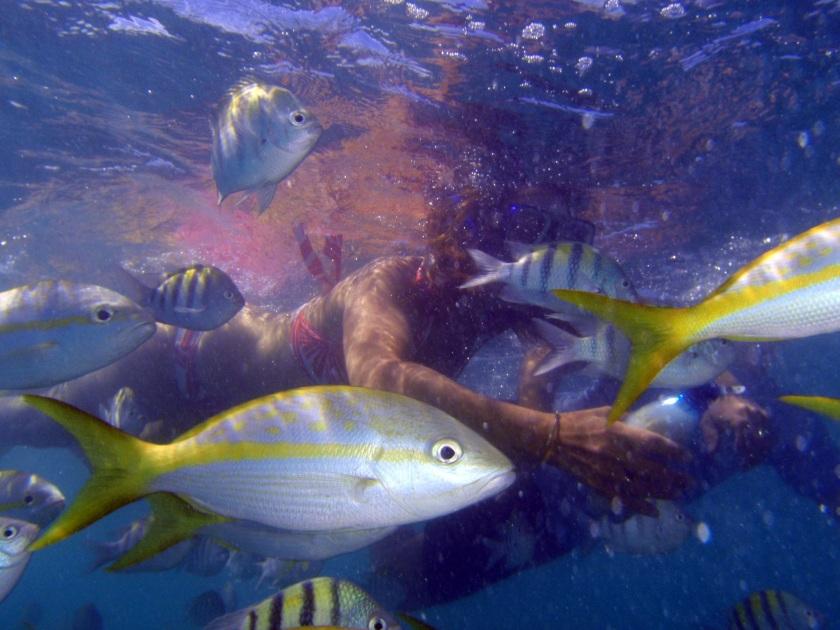 scuba-diving-1211601